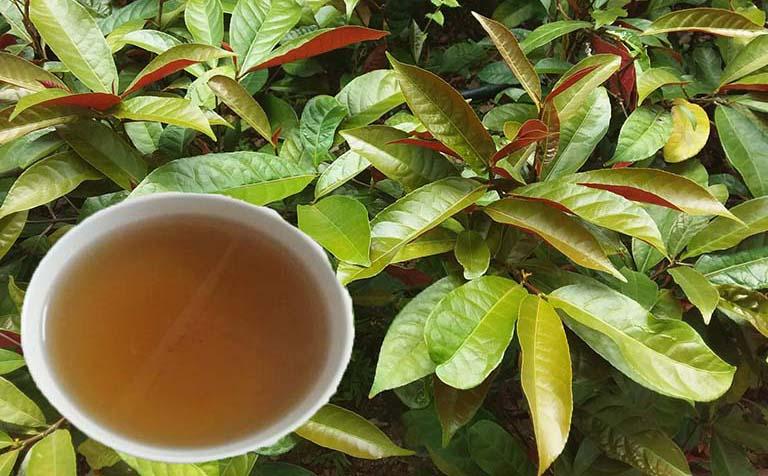 Uống nước lá đơn đỏ giúp giảm mẩn ngứa, bỏng rát ngoài da