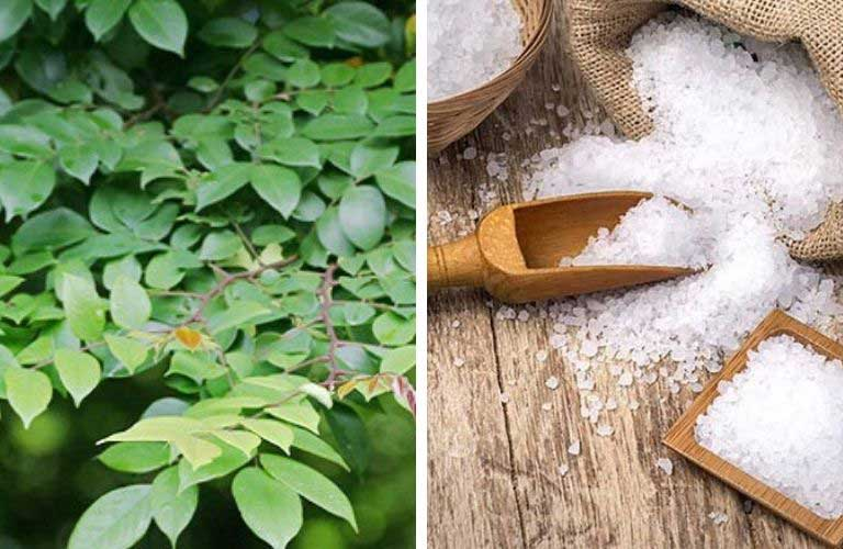 Kết hợp lá khế và muối