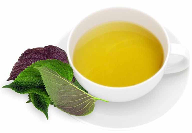 Uống nước lá tía tô giúp thanh nhiệt điều trị bệnh hiệu quả