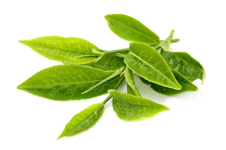 Bài thuốc từ lá chè xanh