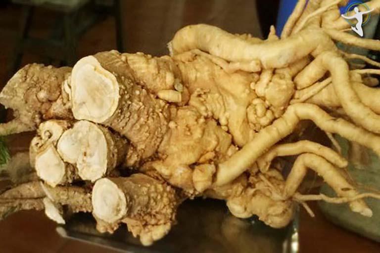 Sử dụng rễ đinh lăng trong bài thuốc trị mề đay với rượu