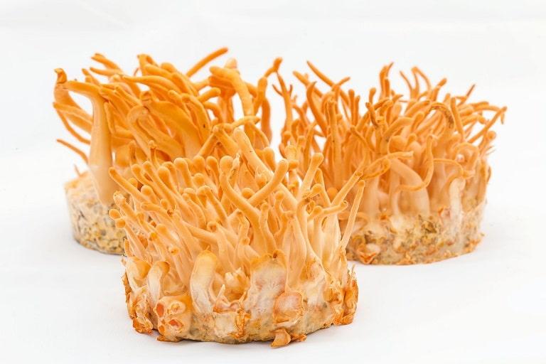 Đông trùng hạ thảo là thảo dược thường xuyên xuất hiện trong bài thuốc trị liệt dương