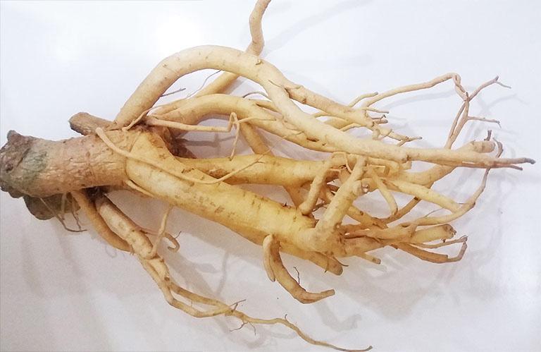 Bài thuốc từ rễ đinh lăng giúp hỗ trợ điều trị bệnh xuất tinh sớm