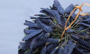 Bồ kết có tác dụng giảm ngứa, tiêu viêm, diệt nấm rất tốt
