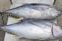 Dị ứng cá ngừ - Cách nhận biết xử lý và điều trị