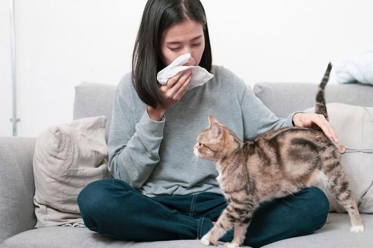 Tình trạng dị ứng lông mèo