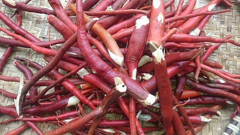 Rễ cau giúp chữa bệnh yếu sinh lý hiệu quả