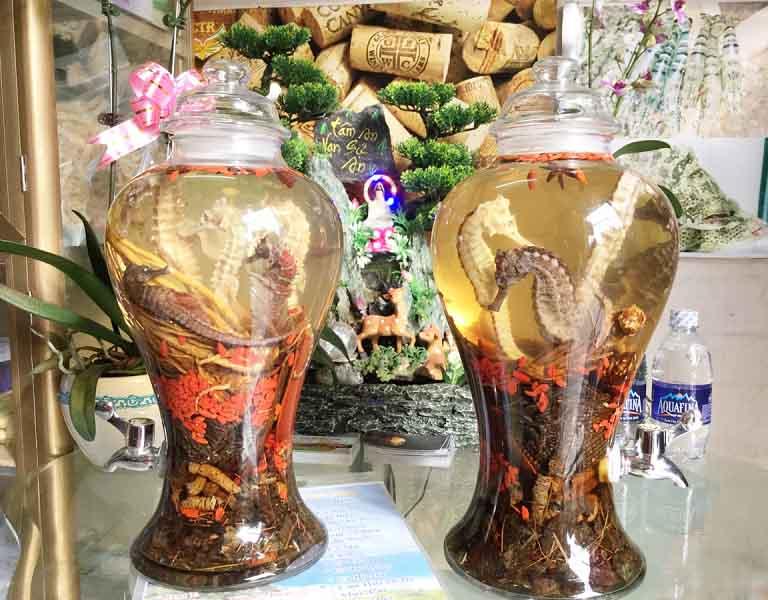 Rượu thuốc cá ngựa trị xuất tinh sớm nhờ khả năng bổ thận, tráng dương