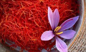 Nhụy hoa nghệ tây có nhiều công dụng to lớn trong y học