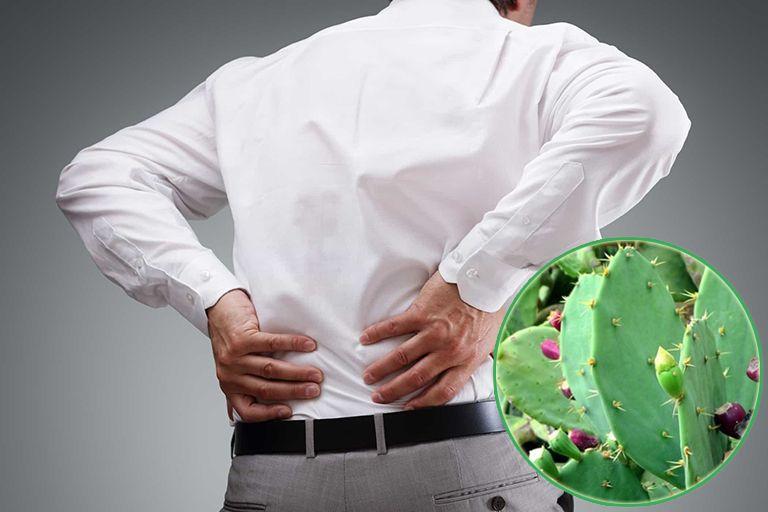 Bài thuốc chữa thoái hóa từ xương rồng chỉ nên áp dụng với người bệnh nhẹ