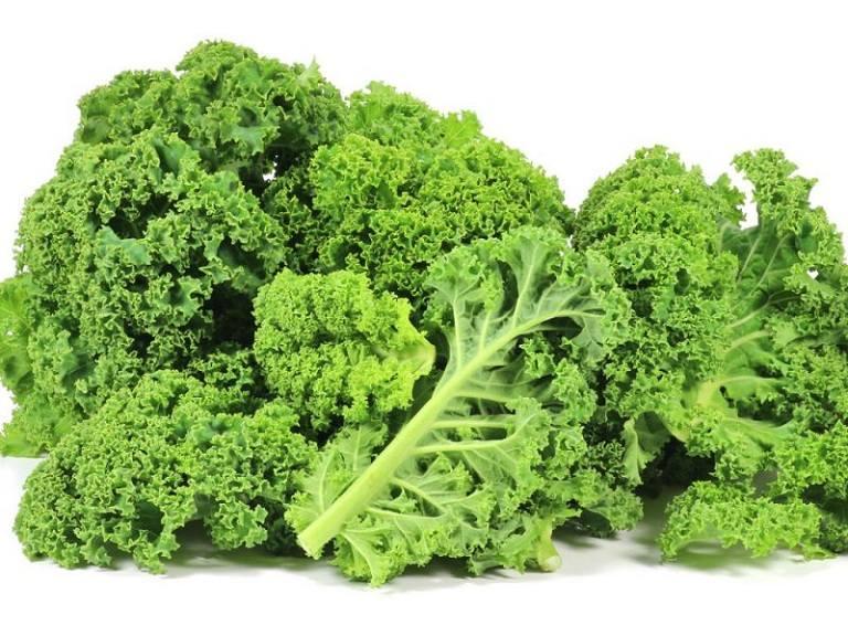 Cải xoăn chứa nhiều vitamin K giúp hỗ trợ điều trị thoái hóa cột sống hiệu quả