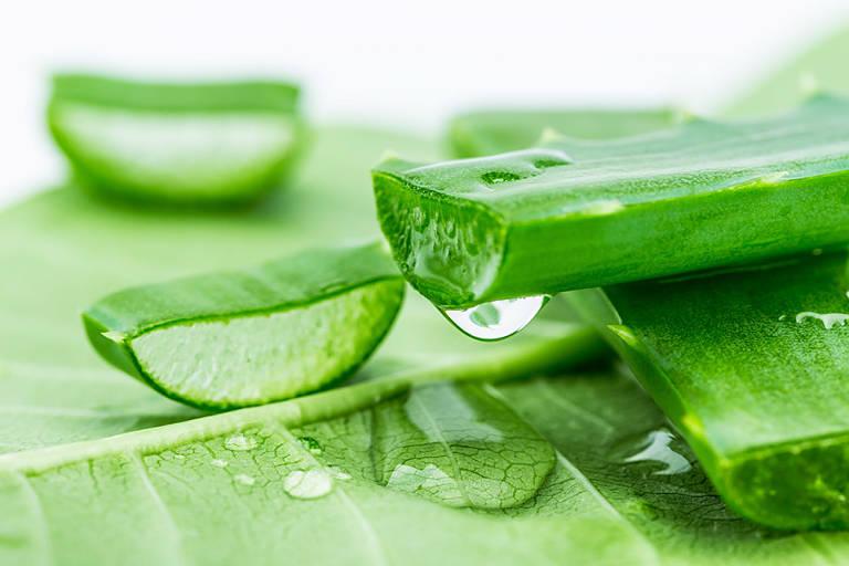 Nha đam có nhiều tinh chất giúp tái tạo làn da và điều trị tình trạng hắc lào bị chàm hóa