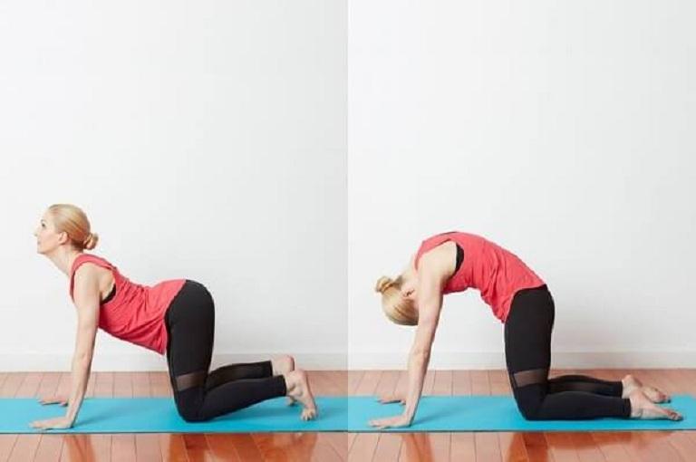 Bài tập yoga với tư thế con mèo giúp làm giãn cơ vùng lưng