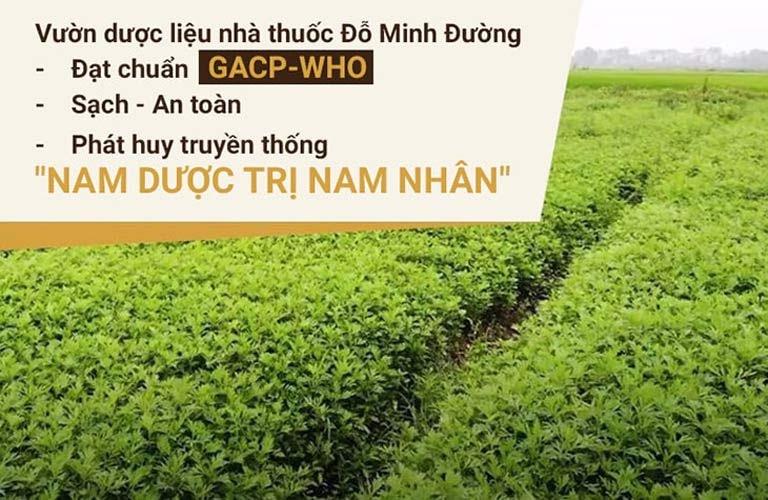 Vườn thảo dược sạch đạt chuẩn GACP - WHO của nhà thuốc Đỗ Minh Đường
